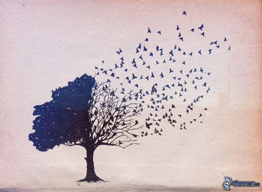 tree,-flock-of-birds-164885.jpg