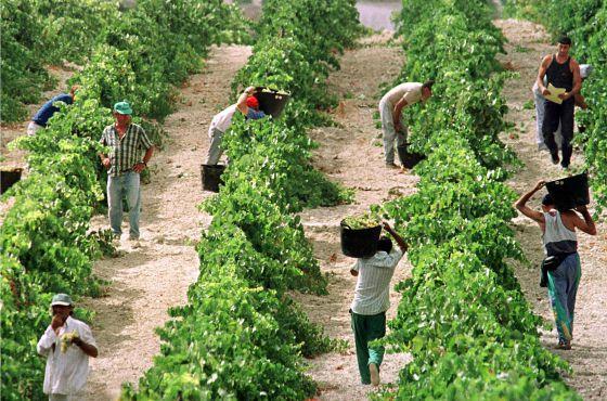 Agricultura en España: El proteccionismo de la Unión Europea acabará con laagricultura.