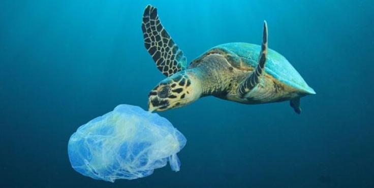 Keeping_track_of_ocean_plastic-32atzplwul6gdn78nwmj6vwn67tgpjnfsvvp57bf8julh6ohq.jpg